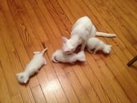 Nouveau chat avec ses chatons