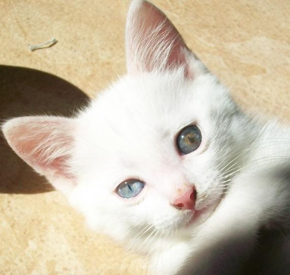 chatons-100_0303-img (4)