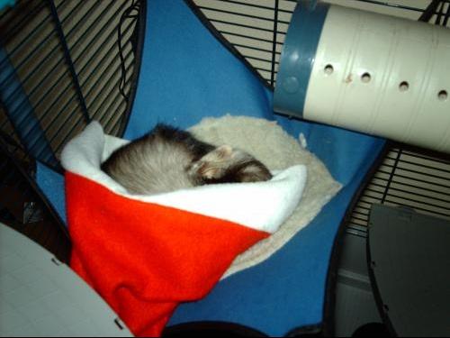 cleo dans le chapeau noel