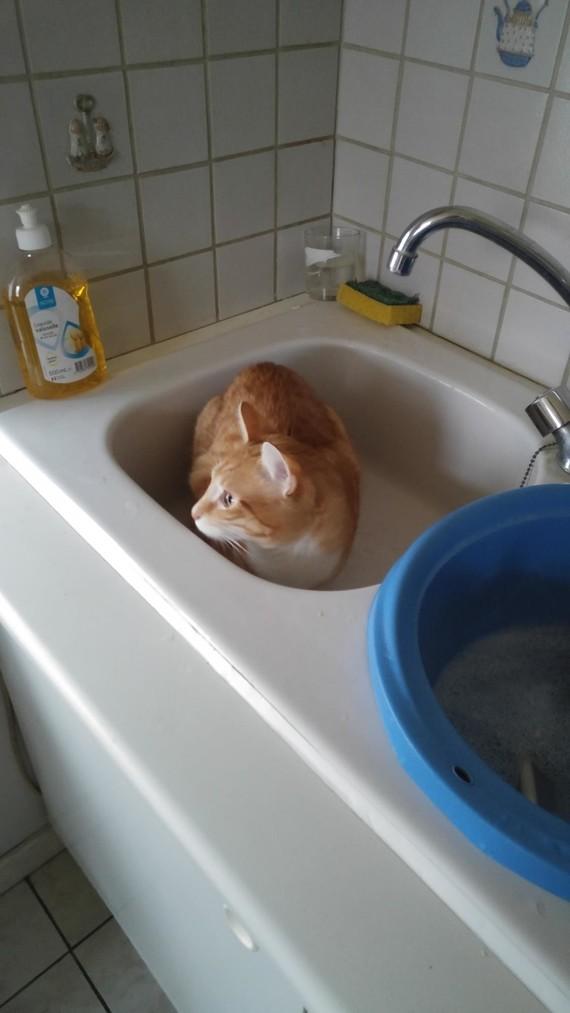 Vanille dans le lavabo