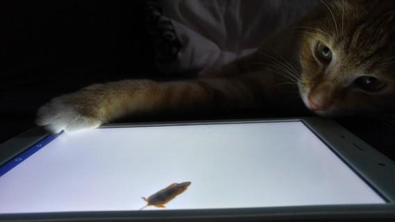 Vanille joue à la tablette