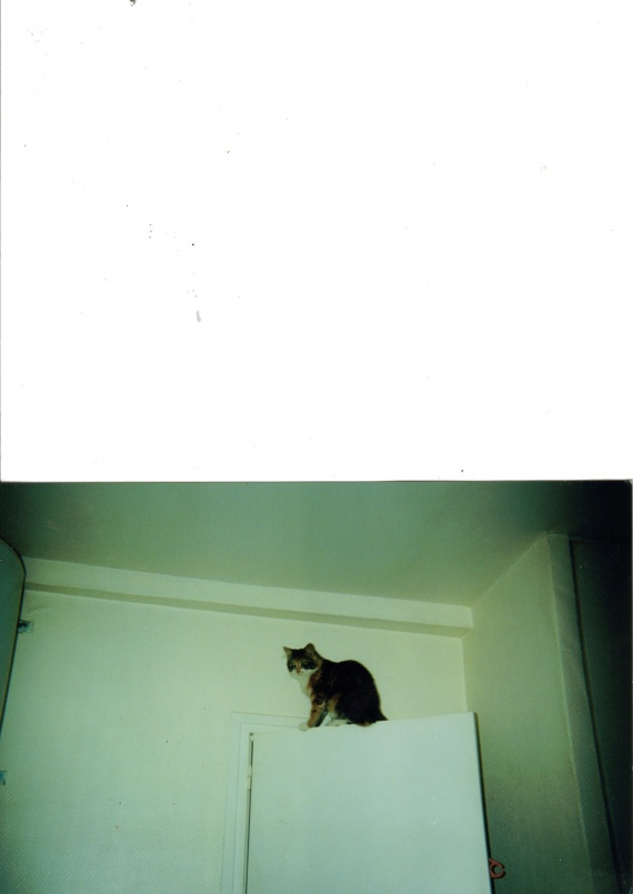 je fais de l escalade