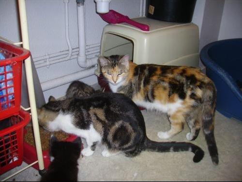 les chatons (2).JPG1.