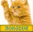 bonjour chat1
