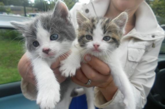 2 chatons