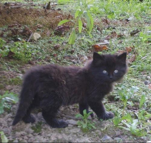 Chaton noir