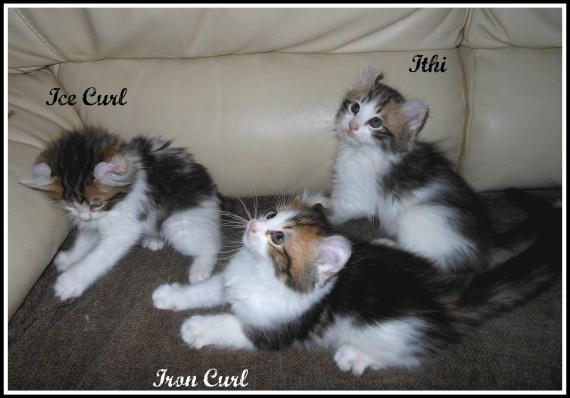 Ithi, Ice et Iron