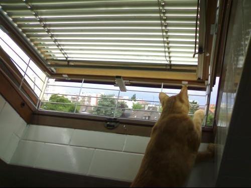 S curit pour nos amis les chats page 4 m decine - Grillage fenetre chat ...