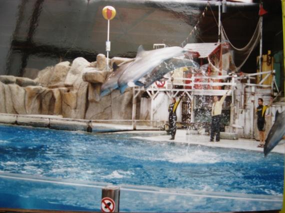 dauphins volants