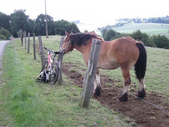 il essait de bouffer ma selle de vélo (Mont des Cats)