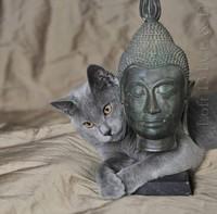 zen chat