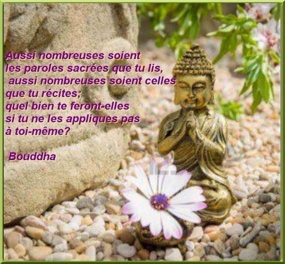 boudha pensée1