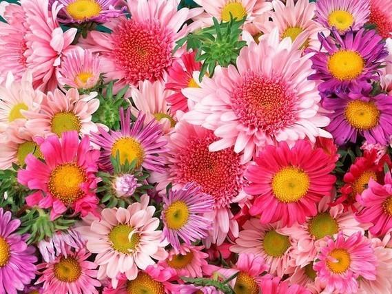 fond de fleurs