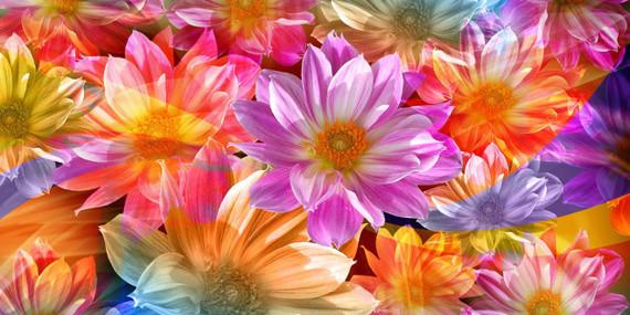 fleurs-magnifiques