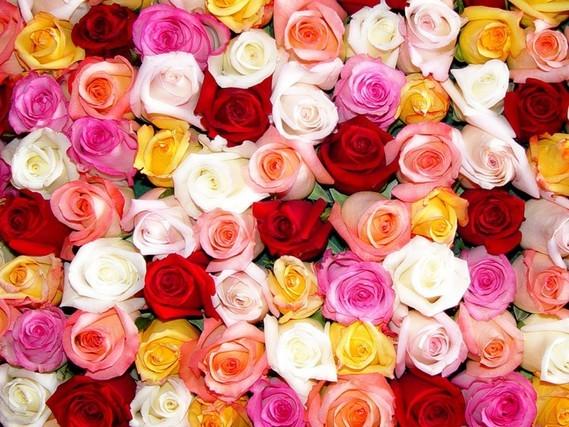 Fond roses multi