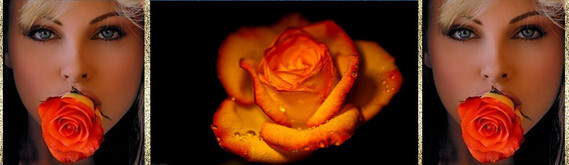 ban rose orange 1