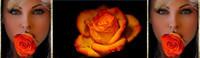 ban rose orange 1