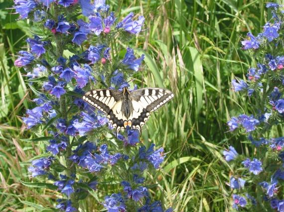 Fleurs et papillon nature nature smenier photos club doctissimo - Initiatives fleurs et nature ...