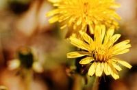 Petite fleur jaune.