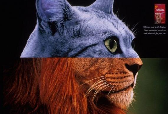 whiskas-bioplus-cat-food-catlion-small-10754