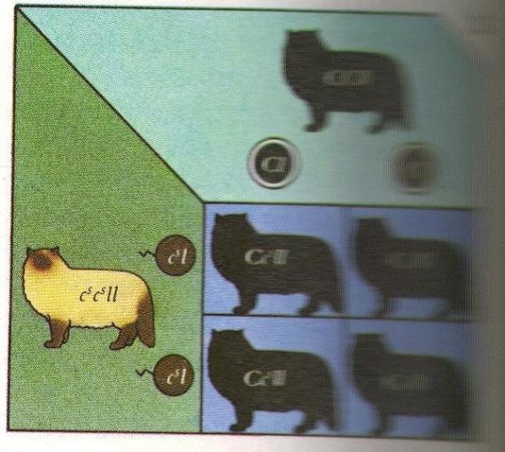 genetiquecolour3