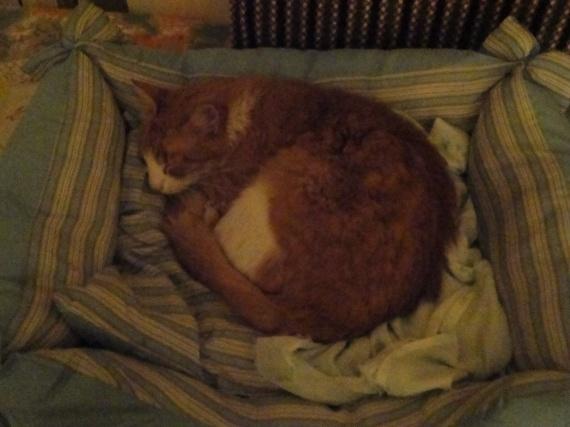 pinou dans son lit