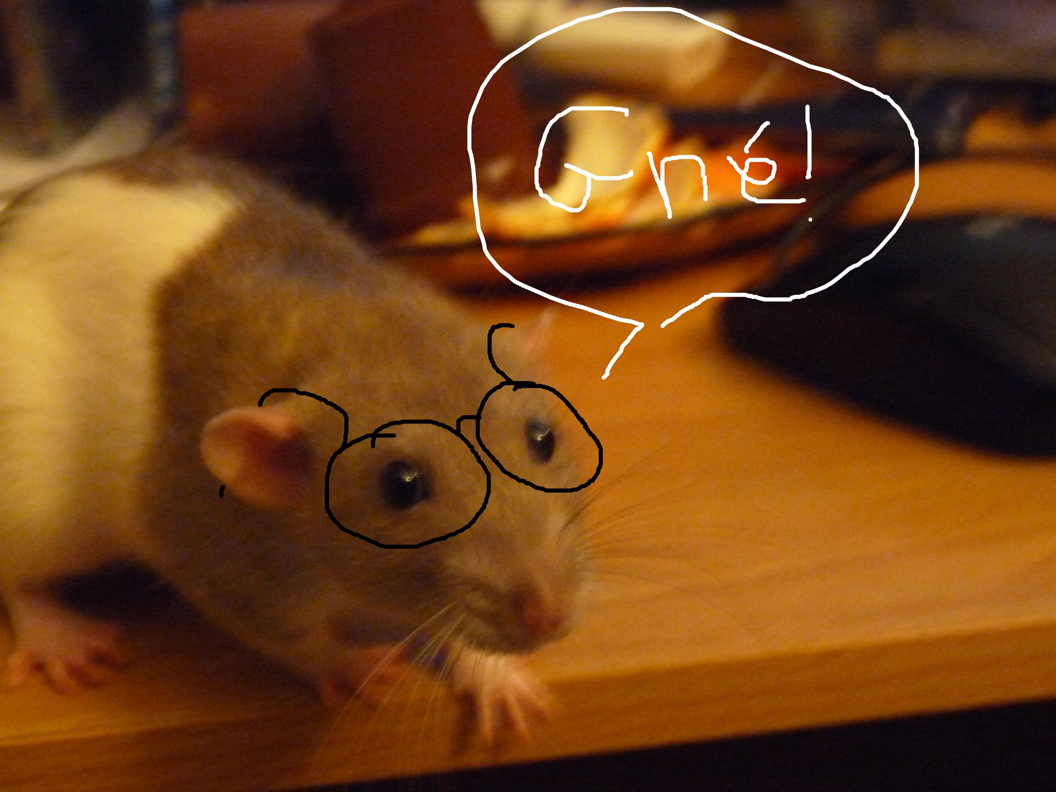 Homme Chat Rat Salle De Bain ~ comment reconnaitre un rat aveugle nouveaux animaux de compagnie