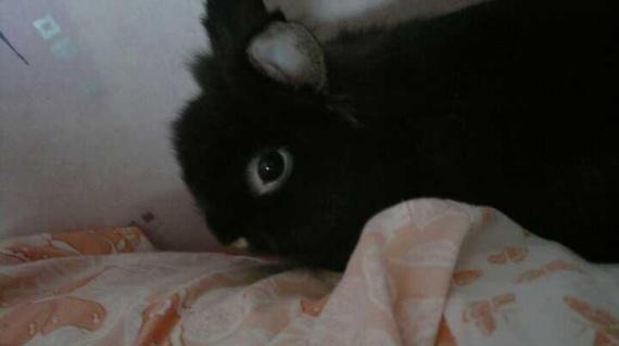 Choupy dans le lit a maman