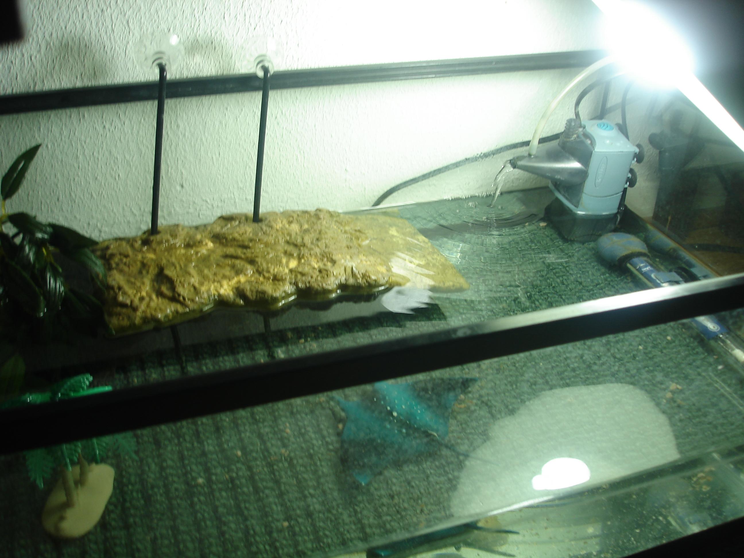 Luxus aquarium a tortue id es de conception de table basse for Aquarium tortue