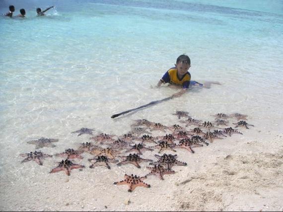 etoiles-de-mer