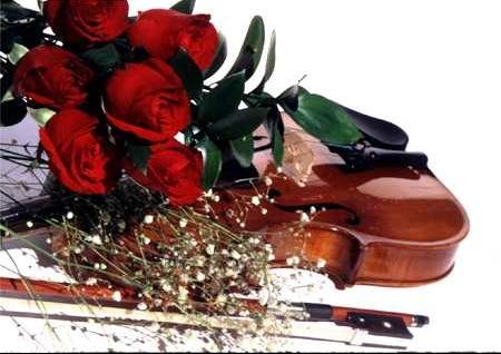 rose_violon_01