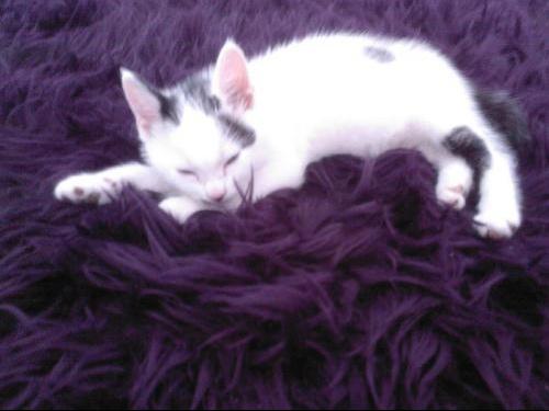 Socrate dort sur le tapis