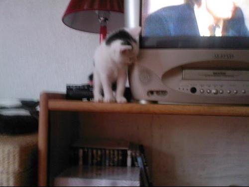 Socrate regarde la tele