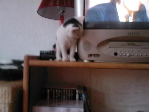 Socrate regarde la télé.jpg1.