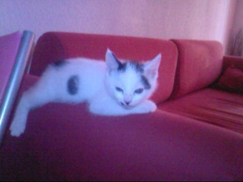 Socrate dort sur le canape