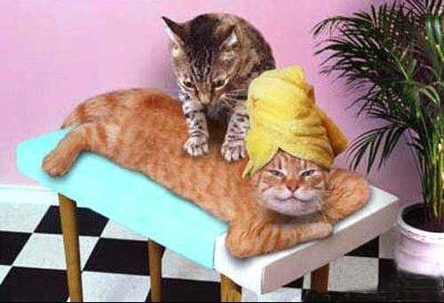 attitudezen-chat-massage