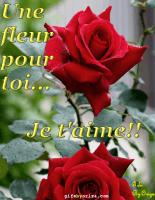 fleurs-om-fleur1-tns0