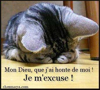 chat honteux