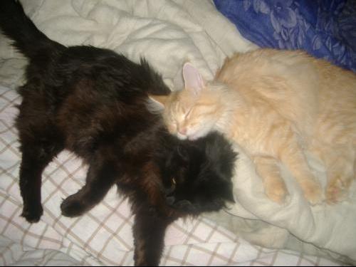 encore des chats 038