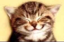 chat sourire doux