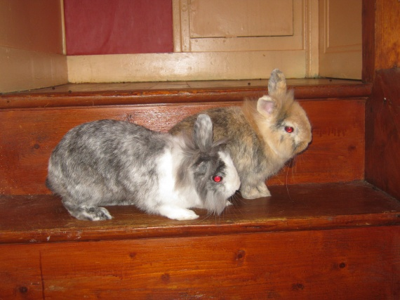 Fleya et Nesquick