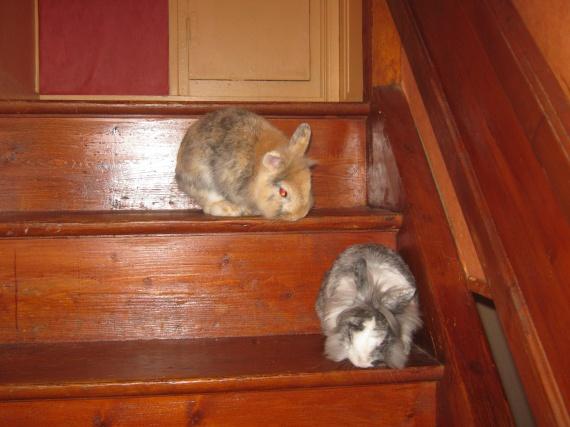 Nesquick et Fleya