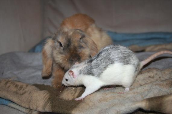 Aslan et Hirwen