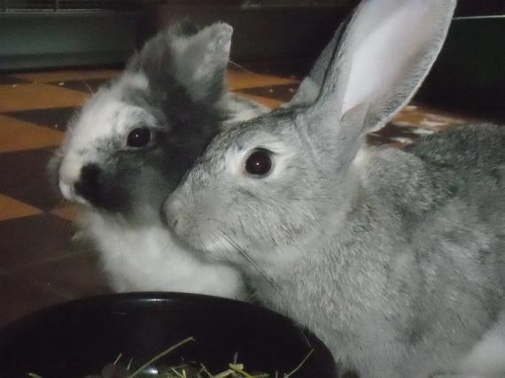 Fleya et Arsène