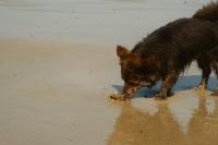 Shenzy et le crabe