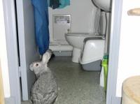 La salle de bain...