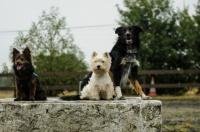 Shenzy, Lico et Glen