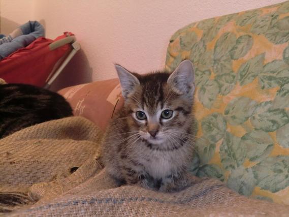 chats-gauvain-img