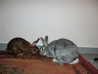 Arsène et Lyra