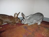 Lyra et Arsène